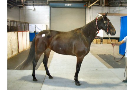 Dione Hanover